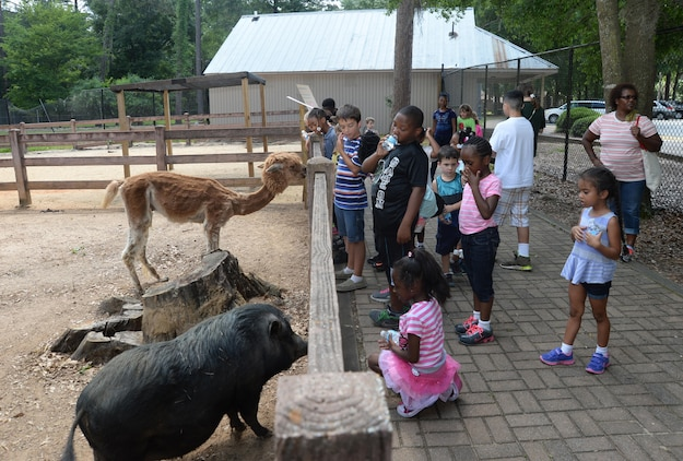 Summer Camp participants continue their summer adventures on a safari to Chehaw Wild Animal Park, Albany, Georgia, June 8. During their visit, students chatted about and fed some the animals at Ben's Barnyard, a petting zoo. The activities are offered as a part of Marine Corps Logistics Base Albany's Child Development Center's 2015 Summer Camp Program, which will run through July 31.