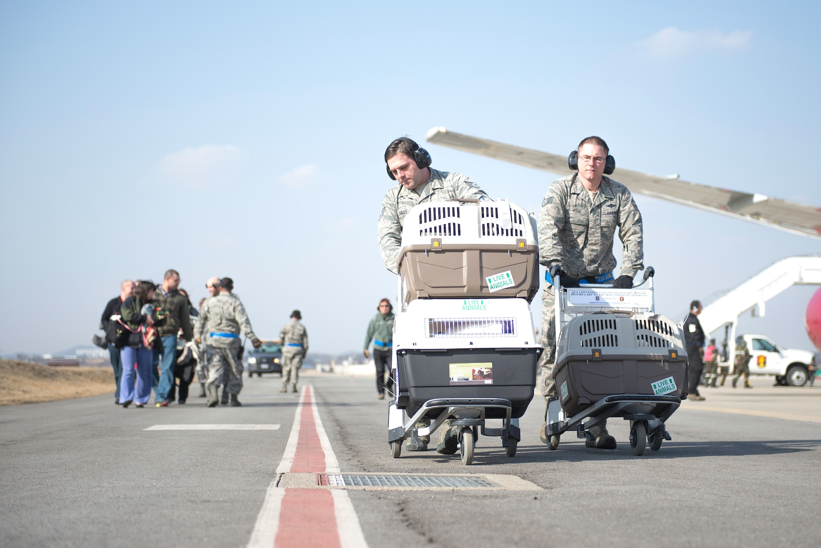 """Air Force Staff Sgt. Evan Hess (right) and David Webb, 731st Air Mobility Squadron passenger terminal supervisors, walk kennels with the first dogs transported on the """"Patriot Express"""" to the Osan Air Base passenger terminal, Republic of Korea, March 2, 2015. The new service provided by the Air Force offers cost savings to the Department of Defense and service members changing duty stations with pets. (U.S. Air Force photo by Staff Sgt. Shawn Nickel/Released)"""