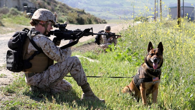 Lance Cpl. Suzette Goddard, military working dog handler, Military Working Dog Platoon, 1st Law Enforcement Battalion, posts security alongside her dog, Denny, during the Counter IED course. Marines with MWD Platoon, 1st LEB and Assault Breacher Vehicle Platoon, Alpha Company, 1st Combat Engineers Battalion, participated in Counter Improvised Explosive Device Training aboard Camp Pendleton, Calif., March 10, 2015.