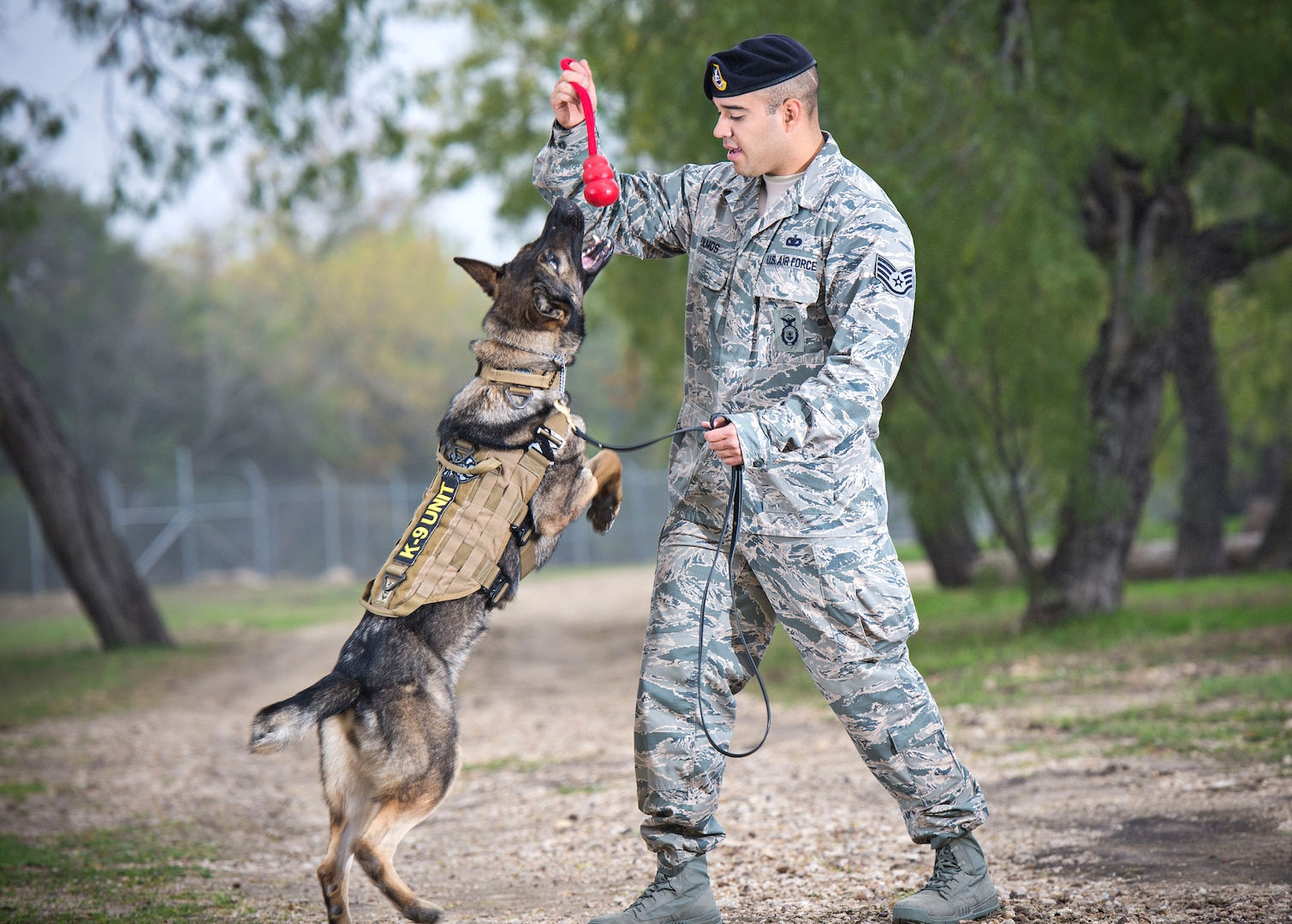 Staff Sgt. Paul Olmos, military working dog handler assigned to the 802nd Security Forces Squadron at Joint Base San Antonio-Lackland, had been partnered with MWD Daysi since September 2014. MWD Daysi was narcotic detection certified and was assigned to the 802nd SFS post her certification in January 2014. Due to an aggressive cancer and an inoperable malignant tumor, MWD Daysi was laid to rest Feb. 27. (U.S. Air Force photo by Benjamin Faske/released)