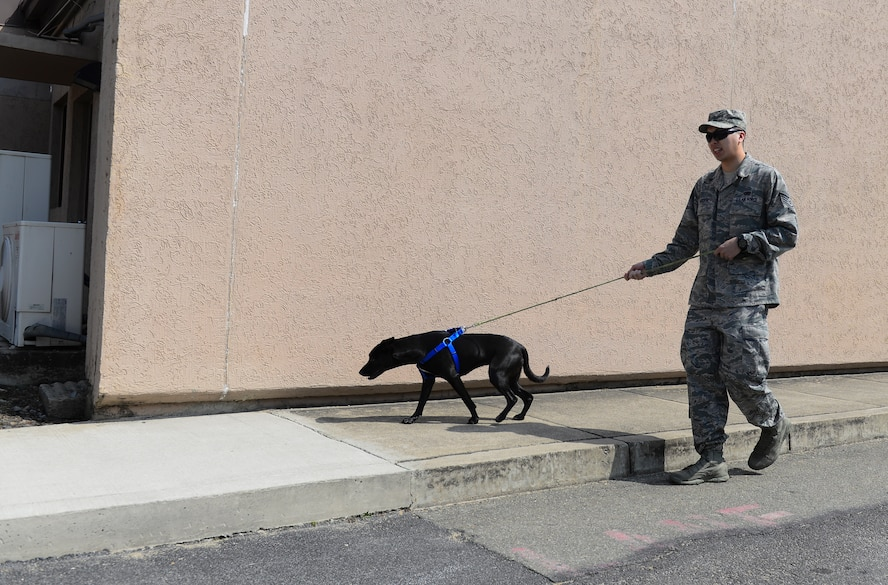 Staff Sgt. Joseph Groffy, 303rd Intelligence Squadron data link operator, walks a dog from the homeward bound animal shelter March 20, 2015, at Osan Air Base, Republic of Korea. Groffy is this week's Team Osan Spotlight winner. (U.S. Air Force photo by Senior Airman David Owsianka)
