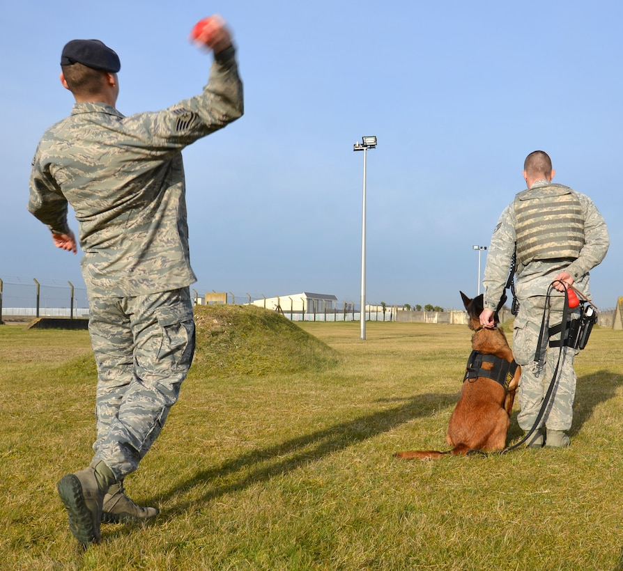 U.S. Air Force Staff Sgt. Joseph Serrano, left, 100th Security Forces Squadron Military Working Dog trainer from San Fernando, Calif., throws a ball for MWD Vvonya while U.S. Air Force Senior Airman Daniel Caldas, 100th SFS MWD handler from Milford, Mass., instructs her to wait for a command before retrieving it during training March 13, 2015, on RAF Mildenhall, England. MWD handlers work with trainers to make sure the dog shows progress. The trainers are out training as much as they can to keep the MWD's skills up to date. (U.S. Air Force photo by Gina Randall/Released)