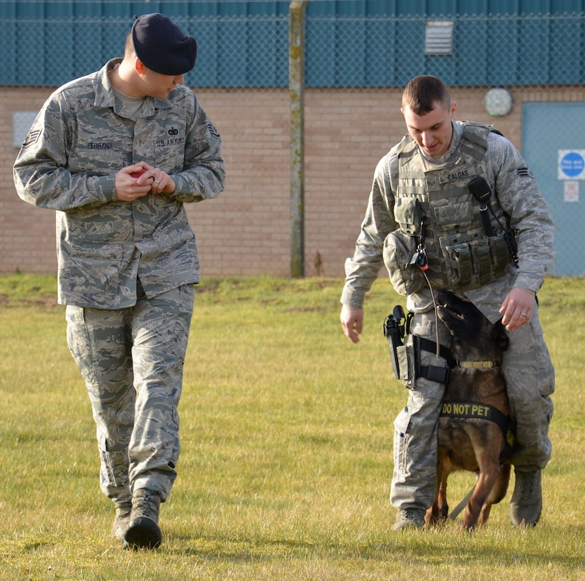 U.S. Air Force Staff Sgt. Joseph Serrano, left, 100th Security Forces Squadron Military Working Dog trainer from San Fernando, Calif., and U.S. Air Force Senior Airman Daniel Caldas, 100th SFS MWD handler from Milford, Mass., put MWD Vvonya through her paces March 13, 2015, on RAF Mildenhall, England. The Airmen were training her to walk in between her handler's legs with a toy as reward. (U.S. Air Force photo by Gina Randall/Released)