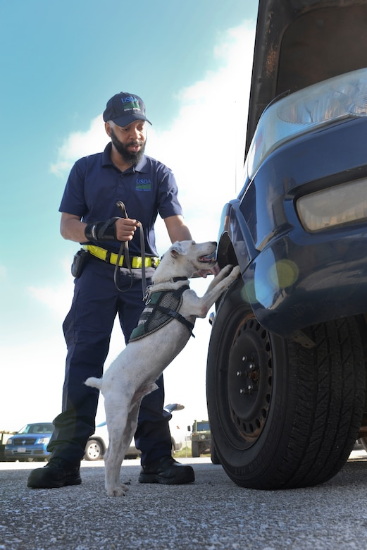 Tony Thompson, U.S. Department of Agriculture brown tree snake detector dog handler, and Striker, a USDA brown tree snake detector dog,  inspect a vehicle during a training session April 30, 2015, at Andersen Air Force Base, Guam. All USDA snake dogs are acquired from various rescue shelters in the Atlanta, Ga., area and are selected based on temperament, willingness to work and prey drive.  (U.S. Air Force photo by Senior Airman Katrina M. Brisbin/Released)