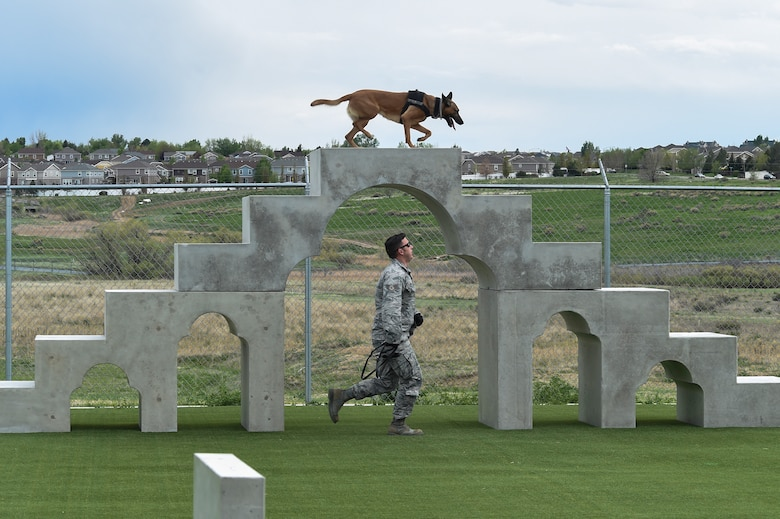 A military working dog handler leads his MWD through an agility course during the Cpl. David Sonka Memorial Competition May 3, 2015, at the 460th Security Forces training field on Buckley Air Force Base, Colo. The weekend's events were held to honor the life of Sonka, a U.S. Marine Corps MWD handler who was killed in action in Afghanistan May 4, 2013. The weekend's events included a motorcade to his grave, two memorial services, the reading of the names of all MWD and MWD handlers killed in action during Vietnam and recent years, a BBQ, and concluded with a multi-service dog handling competition. (U.S. Air Force photo by Senior Airman Phillip Houk/Released)