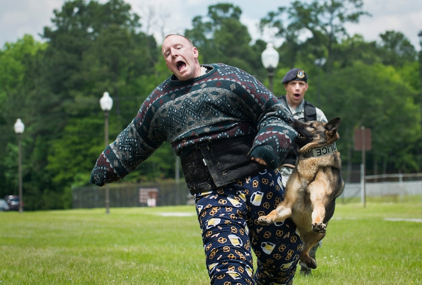 Staff Sgt. Sean Baker is attacked by a military working dog named Hulk May 1, 2015 at Joint Base Charleston, S.C., during the annual base picnic. The two-day event included free food, live music, an inflatable obstacle course, a rock-climbing wall, a military working dog demo, prizes and demonstrations from local organizations. These organizations support service members throughout the year. Baker is a member of the 628th Security Forces Squadron. (U.S. Air Force photo/Senior Airman Jared Trimarchi)