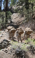 Marines with the Ground Combat Element Integrated Task Force hike along a trail during a Marine Corps Operational Test and Evaluation Activity assessment aboard Marine Corps Mountain Warfare Training Center Bridgeport, California, May 5, 2015. From October 2014 to July 2015, the GCEITF will conduct individual and collective level skills training in designated ground combat arms occupational specialties in order to facilitate the standards-based assessment of the physical performance of Marines in a simulated operating environment performing specific ground combat arms tasks. (U.S. Marine Corps photo by Cpl. Paul S. Martinez/Released)