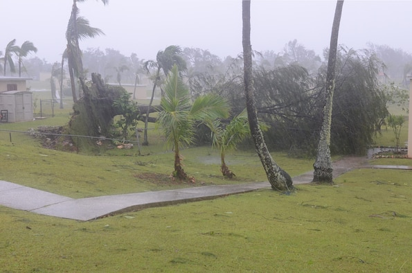 Destructive winds topple a tree in base housing May 16, 2015, on Andersen Air Force Base, Guam. The island was hit by Typhoon Dolphin, causing damage and power outages throughout the entire island. (U.S. Air Force photo by Airman 1st Class Alexa Ann Henderson/Released)