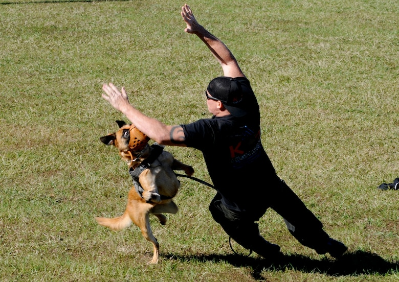 Military Working Dog Nnora attacks Scott Clark, High Drive K-9 owner, while wearing an aggression muzzle for training purposes Nov. 10 at Columbus Air Force Base, Mississippi. High Drive K-9 creates reality based K-9 training to enhance the MWD capabilities and keep them ready for an attack. (U.S. Air Force photo/Melissa Doublin)