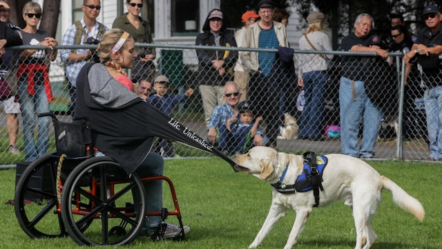 Oz Robinson, an apprentice instructor with canine companions, demonstrates the different capabilities of their trained service dogs during the Bark at the Park event Oct. 10, as part of San Francisco Fleet Week 2015. SFFW 15' is a week-long event that blends a unique training and education program, bringing together key civilian emergency responders and Naval crisis-response forces to exchange best practices on humanitarian assistance disaster relief with particular emphasis on defense support to civil authorities.