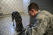 U.S. Air Force Staff Sgt. Carey Tignor, a 354th Security Forces Squadron military working dog (MWD) trainer, feeds MWD Tedy during his shift Oct. 13, 2015, at Eielson Air Force Base, Alaska. As a trainer, Tignor assists in feeding, bathing and ensuring the dogs stay in good health. (U.S. Air Force photo by Senior Airman Peter Reft/Released)