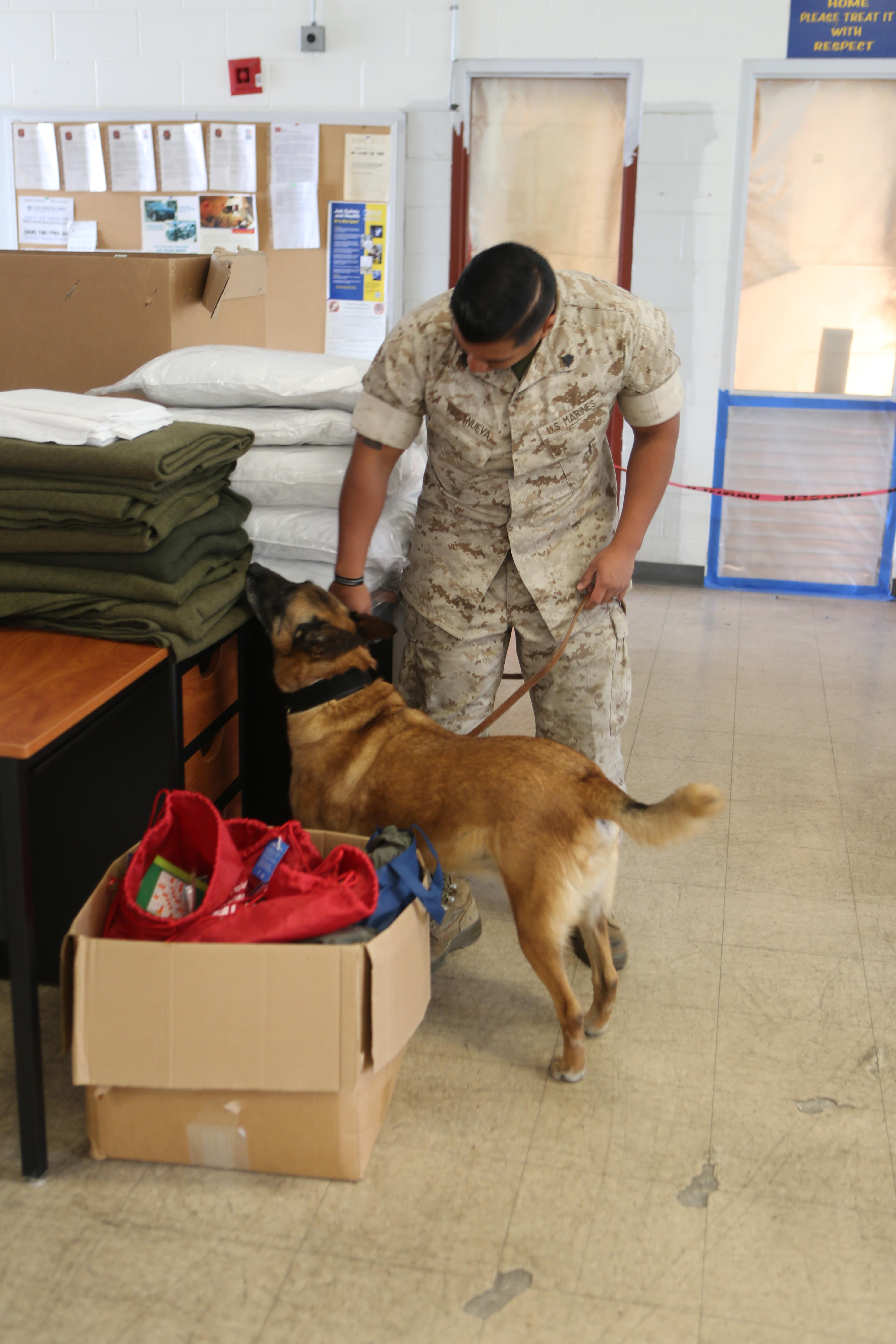 how to become a military working dog handler