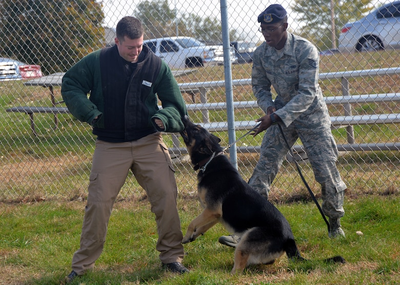 Military Working Dog Rocky bites simulated assailant, Senior Airman David Bafaro, 55th Security Forces Squadron MWD handler, as Staff Sgt. Elbert Foreman, 55th SFS MWD handler holds his leash, Oct. 21 at the 55th SFS MWD training facility. MWD Rocky is a fully certified, trained and validated explosive detector dog valued at nearly $25,000. (U.S. Air Force photo by Kendra Williams/Released)