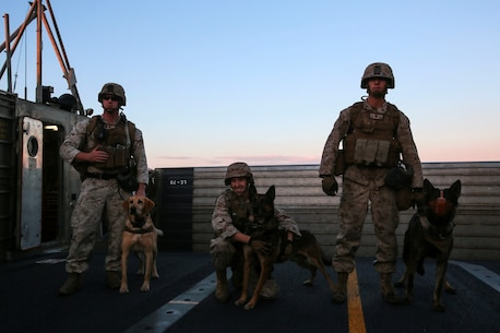 Marines and their military working dogs  with 1st Law Enforcement Battalion, I Marine Expeditionary Force, explore the deck of a Landing Craft Air Cushion before searching for explosives on the beach aboard Marine Corps Base Camp Pendleton, Calif., Oct. 21, 2015. Exposing dog teams to working with different equipment and scenarios enhances their skills across a range of secuirty threats in support of Marine Air Ground Task Force operations. (U.S. Marine Corps photo by Lance Cpl. Caitlin Bevel)