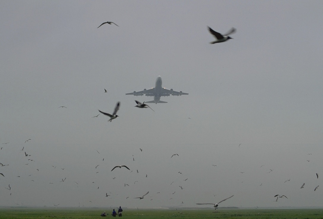 It is the responsibility of the Tinker Bird Aircraft Strike Hazard group to keep the airfield free from birds that can cause damage to flying aircraft. Their task is much more difficult in the spring and fall, when migratory birds fly through Tinker's air space. (Air Force photo by Kelly White/Released)