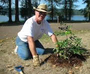 Corps volunteer Dave Beach plants native Oregon grape at Cottage Grove Lake in Willamette Valley. Volunteers are critical to Corps recreation programs, where they greet guests, help control invasive plants and help out in many ways.