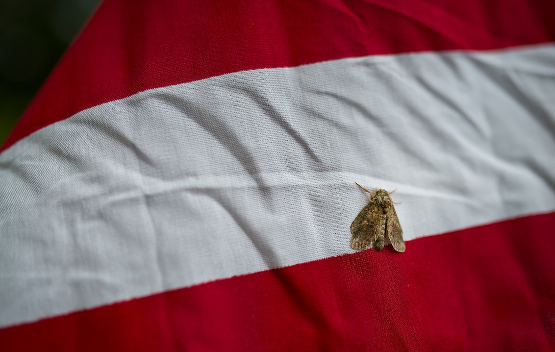 A moth clings to one of the approximately 352 flags set up on the Field of Valor display in Niceville, Fla. Sept. 11.  The display features 13 rows of 27 flags and one extra to create the field.  Names of recently fallen military members, including 10 Airmen, adorn each of the American flags.  The Field will be on display through Sept. 19 at the Mullet Festival grounds and is free to the public.  (U.S. Air Force photo/Tech. Sgt. Sam King)