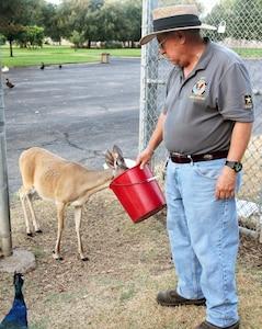 Fort Sam Houston Quadrangle animal caretaker Adam Quintero feeds one of the quad's many deer during his daily routine.