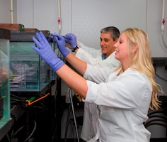ERDC-EL Research Biologists Dr. Guilherme Lotufo, left, and Lauren Rabalais set up a 