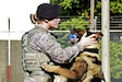 U.S. Air Force Senior Airman Alyssa Stamps, 35th Security Forces Squadron military working dog handler, plays with her dog, Elvis, at Misawa Air Base, Japan, Sept. 23, 2015. Stamps and Elvis were training to become a certified military working dog team. U.S. Air Force photo by Airman 1st Class Jordyn Fetter