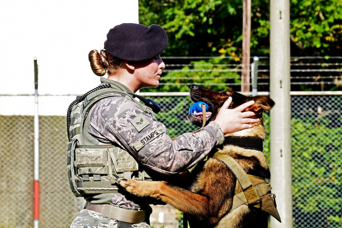 U.S. Air Force Senior Airman Alyssa Stamps, 35th Security Forces Squadron military working dog handler, plays with her dog, Elvis, at Misawa Air Base, Japan, Sept. 23, 2015. Stamps and Elvis are training to become a certified MWD team to partake in real-world scenarios. (U.S. Air Force photo by Airman 1st Class Jordyn Fetter/Released)