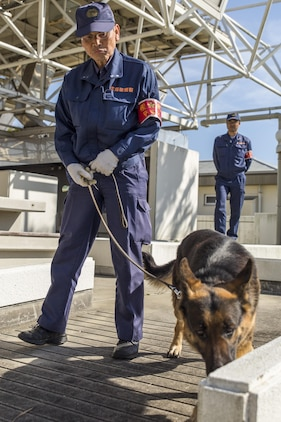 Police Lt. Muneyuki Hirao, a police dog trainer at Hiroshima Prefectural Police Headquarters, and his K-9 search for explosives during joint training with Marines from the Provost Marshal's Office at Marine Corps Air Station Iwakuni, Japan, March 22, 2016. Trained in a variety of areas such as locating explosives and narcotics and conducting patrols, handlers and their military working dogs train regularly in order to maintain operational readiness, become a more effective team and ensure the safety of the station residents. Sgt. Adrian Nanez, PMO kennel master with Headquarters and Headquarters,  placed explosives in hidden locations while the duo waited out of site, resulting in a more cautious and thorough search, increasing the overall training effectiveness. (U.S. Marine Corps photo by Lance Cpl. Aaron Henson/Released)