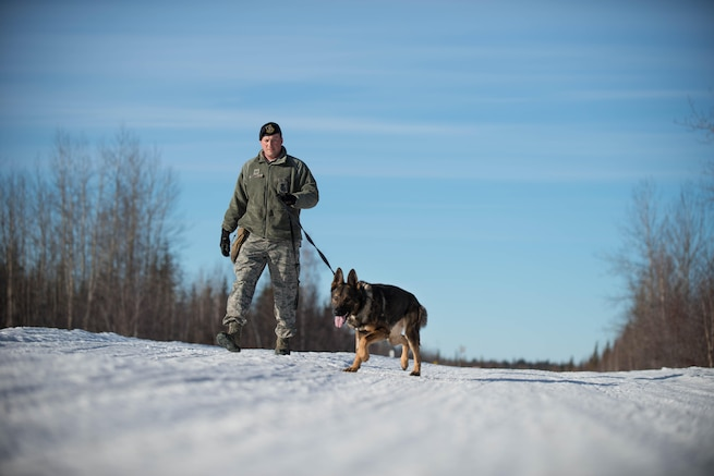 """U.S. Staff Sgt. Barret Chappelle, a 354th Security Forces military working dog (MWD) handler, works with MWD Cage at Eielson Air Force Base, Alaska, March 7, 2016. Military working dogs from Eielson work alongside the human defenders who stand """"Ready to go at 50 below"""" 24 hours a day protecting assets at the top of the world in the U.S. Air Force's Pacific theater of operations. (U.S. Air Force photo by Staff Sgt. Shawn Nickel/Released)"""