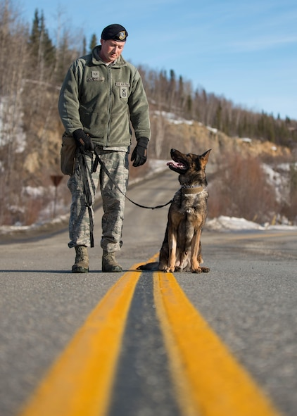 U.S. Staff Sgt. Barret Chappelle, a 354th Security Forces military working dog (MWD) handler, works with MWD Cage at Eielson Air Force Base, Alaska, March 7, 2016. Military working dogs and handlers create a special bond and relationship, which benefits them at home station and when deployed around the world supporting combatant commanders. (U.S. Air Force photo by Staff Sgt. Shawn Nickel/Released)