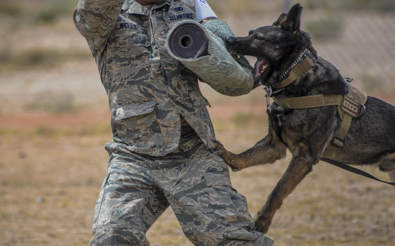 'PJ', a military working dog assigned to the 99th Security Forces Squadron, bites down on a padded arm sleeve during a demonstration at Nellis Air Force Base, Nev. April 7, 2016. The MWDs go through training just as intense as what the handler goes through during their own 55 day training course. (U.S. Air Force photo by Airman 1st Class Kevin Tanenbaum)