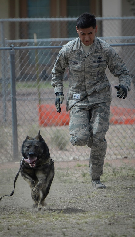 Staff Sgt. Adrian Alvarez, 99th Security Forces Squadron military working dog handler, runs with 'PJ', 99th SFS military working dog, during a MWD demonstration at Nellis Air Force Base, Nev., April 7, 2016. While demonstrations serve as a good way to display and inform the public of the capabilities of MWDs, they only highlight a very small portion of their mission and capabilities of the handler and the dog. (U.S. Air Force photo by Airman 1st Class Nathan Byrnes)