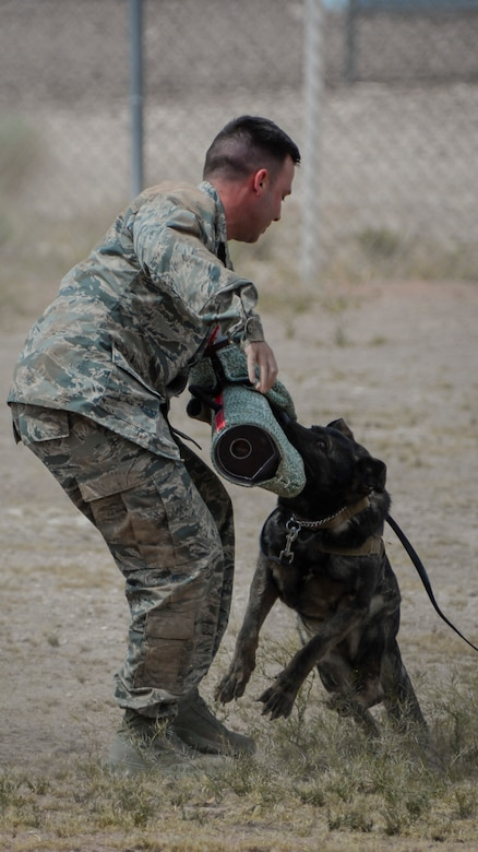 'PJ', 99th Security Forces Squadron military working dog, bites the arm pad during a MWD demonstration at Nellis Air Force Base, Nev., April 7, 2016. The constant training coupled with the unique bond between handler and dog is what allows the 99th SFS MWD unit to be mission ready and consistently perform at the highest level. (U.S. Air Force photo by Airman 1st Class Nathan Byrnes)