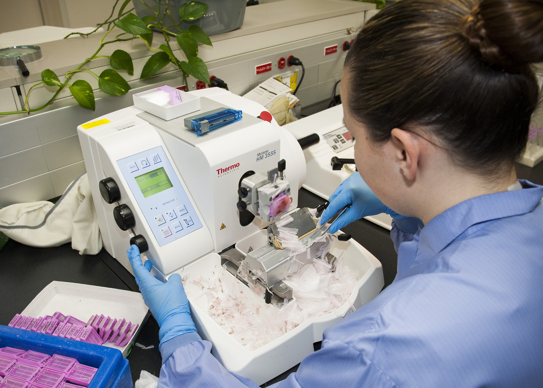 pathology lab processes tissue