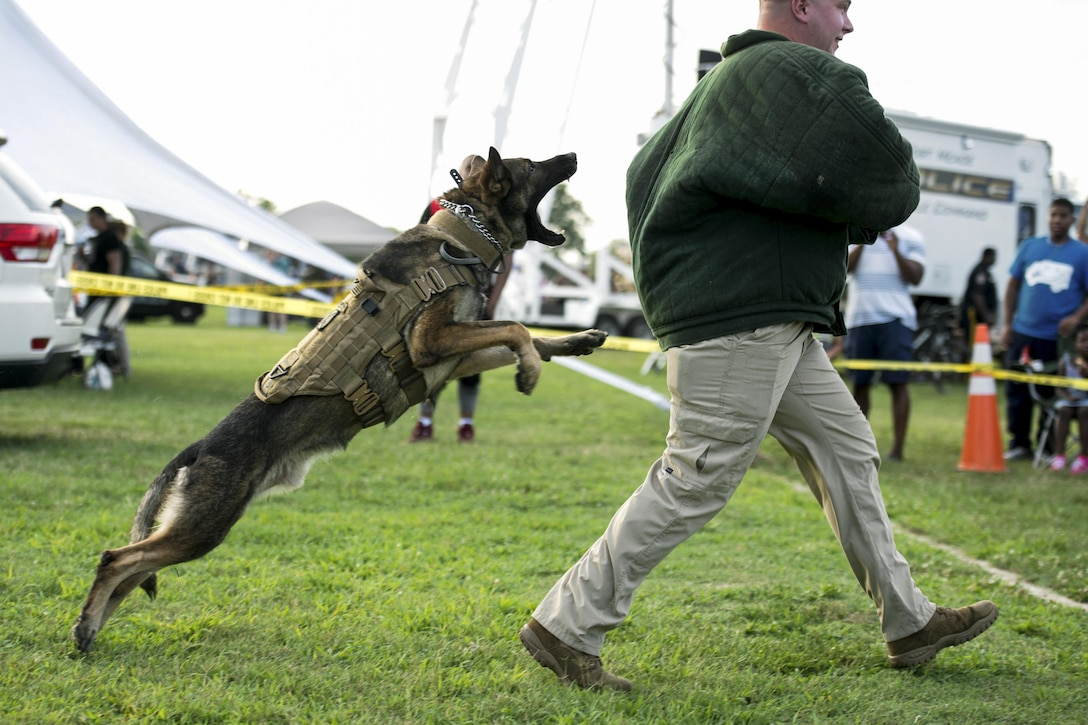 Canto, a military working dog, jumps toward Army Pfc. Patterson, who plays the role of an aggressor during a military working dog demonstration at Fort Meade, Md., Aug., 2, 2016. DoD photo by EJ Hersom