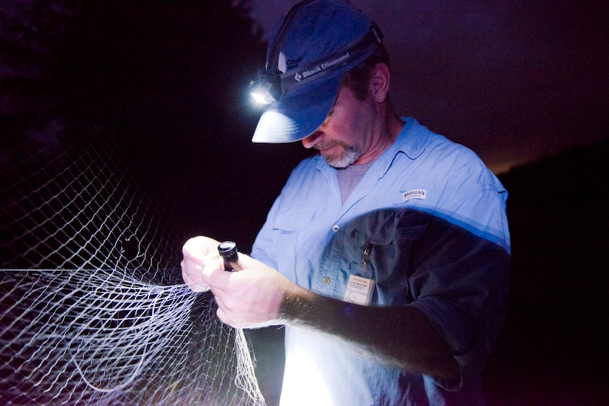 Dustin Janeke, a biologist project manager for HDR, untangles a beetle from a net set up to catch bats as part of a bat survey of the 167th Airlift Wing property, June 23. The National Guard Bureau contracted with HDR to conduct searches at several installations for the northern long-eared bat which was recently listed as a threatened species. (U.S. National Guard photos by Senior Master Sgt. Emily Beightol-Deyerle)