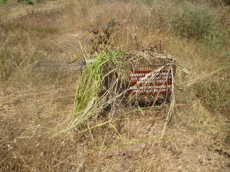 A live animal trap covered with foliage sits in a field on Incirlik Air Base, Turkey. The 39th Civil Engineer Squadron pest management flight utilizes humane traps to catch stray and wild animals roaming the base such as cats, dogs and foxes. (Courtesy photo)