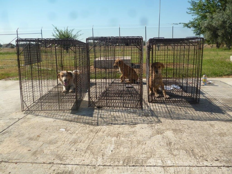Three dogs sit in cages on Incirlik Air Base, Turkey. The dogs were captured by members of the 39th Civil Engineer Squadron pest management flight. Dogs captured on the base are checked for microchip at the veterinary clinic on base before being sent local animal shelter in the city of Adana. (Courtesy photo)