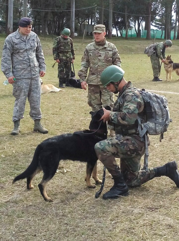 Uruguayan military members train with their military working dogs during a nine day training event facilitated by 12th Air Force (Air Forces Southern) and the U.S. Embassy in Montevideo, Uruguay, Aug. 12, 2016. (Courtesy Photo)