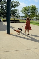 """Walsh walks with her dogs outside the Defense Information School. """"There's never really a bad day when they're around,"""" Walsh said. Katie Walsh, a Content Management Course instructor at the Defense Information School on Fort Meade, Aug. 16, 2016, at the school. Walsh and her husband adopted Ren in December, while Ginger, originally a foster dog, officially joined the family in August."""