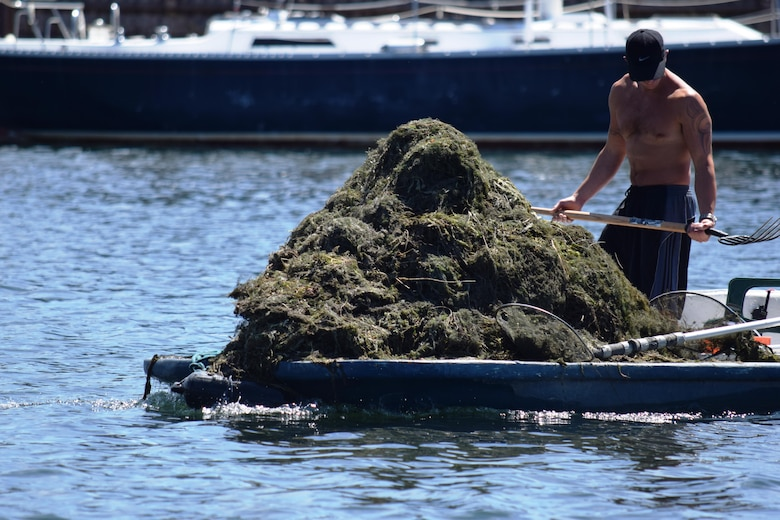 A mound of harvested Eurasian watermilfoil piles up Aug. 24, 2015, near the Tahoe Keys in South Lake Tahoe, California. Residents of the private community pay to remove the aquatic invasive species because it can wrap around propellers and clog up filters on watercraft. The U.S. Army Corps of Engineers Sacramento District works with local partners to combat aquatic invasive species because they pose a major threat to ecosystem health in the Lake Tahoe Basin by degrading water quality and destroying important habitat to native species.