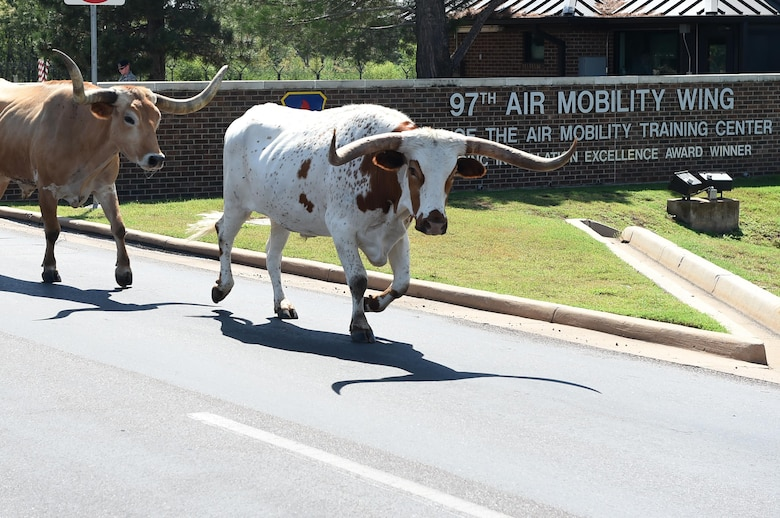18th Annual Cattle Drive Makes Its Way Through Altus Afb Altus Air Force Base Article Display