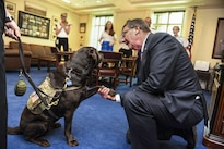 Defense Secretary Ash Carter shakes hands with Pvt. Truman, a working dog assigned to Walter Reed National Military Medical Center in Bethesda, Md., at the Pentagon, Aug. 26, 2016, to recognize National Dog Day. DoD photo by Navy Petty Officer 1st Class Tim D. Godbee