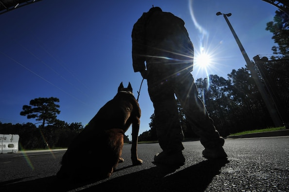 Ziko, a military working dog with the 1st Special Operations Security Forces Squadron, sits alongside Staff Sgt. George Garcia, a military working dog handler with the 1st SOSFS, at Hurlburt Field, Fla., Aug. 22, 2016. Handlers and dogs are responsible for providing the base with narcotic and explosive detection as well as patrol work. (U.S. Air Force photo by Airman 1st Class Joseph Pick)