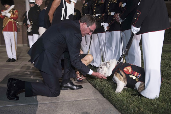 "Defense Secretary Ash Carter pets Cpl. Chesty XIV, the Marine Corps mascot named for Lt. Gen. Lewis B. ""Chesty"" Puller, after the Evening Parade at the Marine Barracks Washington, D.C., Aug. 26, 2016.  DoD photo by Navy Petty Officer 1st Class Tim D. Godbee"