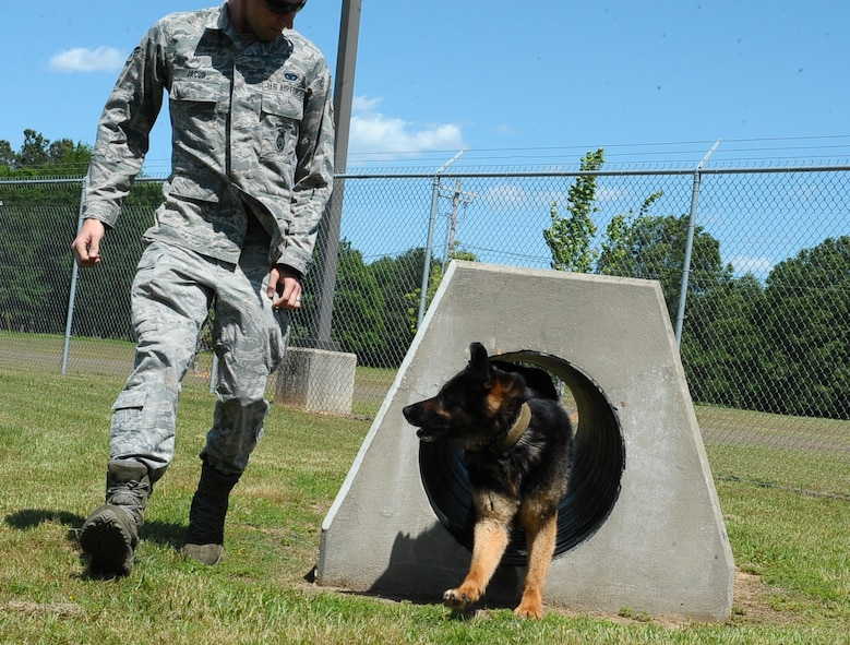 Senior Airman Kyle Jacob, 14th Security Forces Squadron Military Working Dog Handler, guides MWD Rex through the demo course May 5, 2016, at Columbus Air Force Base, Mississippi. Although defenders do not participate in law enforcement outside the gate, they do interact with the local community by providing the local police force with their MWD and handlers as the mission allows. (U.S. Air Force photo by Senior Airman Kaleb Snay)