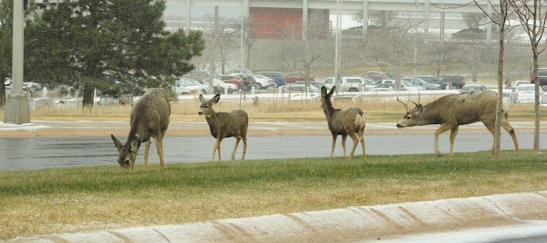 The Air Force Academy announced areas will be off-limits to hunters during the Academy Natural Resources Office's annual installation deer hunt, Dec. 10-12 and 17-19. (U.S. Air Force photo/John Van Winkle)