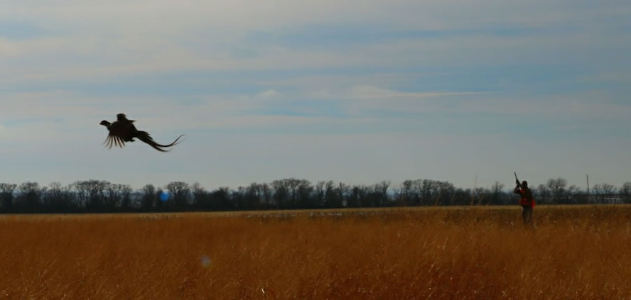 A rooster pheasant flushes ahead of a line of hunters during a hunting event provided to Airmen by two Onida, S.D., landowners Nov. 19, 2016. (Courtesy photo provided by 1st Lt. Jamie Seals)