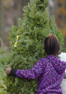 A child picks out a tree during Christmas SPIRIT Foundation's Trees for Troops program at Joint Base Langley-Eustis, Va., Dec. 5, 2016. Trees for Troops is a non-profit program that provides free-farm grown Christmas trees to service members around the world. (U.S. Air Force photo by Staff Sgt. Natasha Stannard)