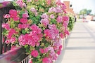 Colorful flowers decorate the Main Street of El Dorado, Kansas. Visitors can find a variety of businesses and art galleries on Main Street.