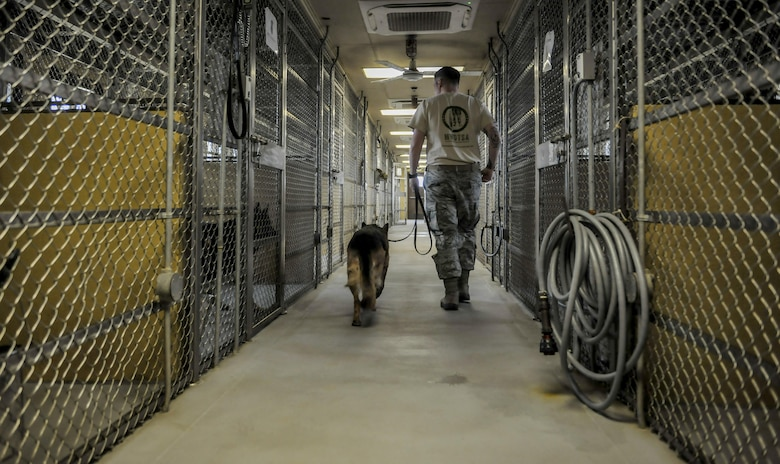 Staff Sgt. Bryan Tarantella, 8th Security Forces military working dog handler, walks Stella, 8th SFS military working dog, into her kennel after a day of agility bite training and commands at Kunsan Air Base, Republic of Korea, Nov. 11, 2016. Stella has come to the end of her military service and will be retiring because of lumbosacral disease, which is the degeneration of the joints, spine and compression of the nerves causing lower back discomfort as well as leg pain.  (U.S. Air Force photo by Senior Airman Colville McFee/Released)