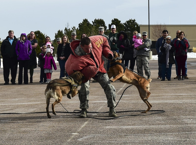 Staff Sgt. John Cooper, 460th Security Forces military working dog handler, takes two dog bites from MWDs Ari and Jeja during a live experience at Team Buckley Spouse and Family Day at the Base Chapel on Buckley AFB, Colo., Dec. 22, 2016. The event consisted of families given access to see the 460th Space Wing mission up close, with demonstrations from the operators, Defenders, and firefighters. (U.S. Air Force photo by Tech. Sgt. Nicholas Rau/Released)